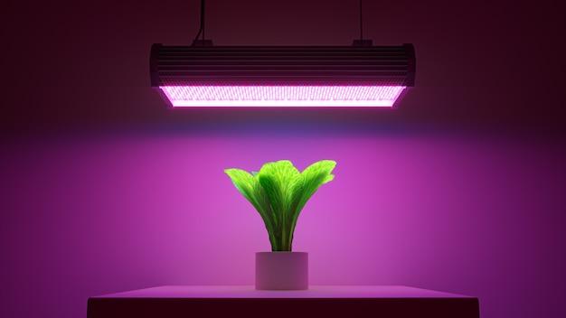 3d render groene plant in een pot onder roze led-licht