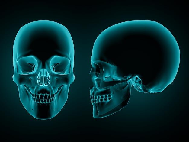 3d render van een voor- en zijaanzicht van een schedel