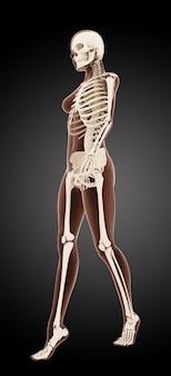 3d render van een vrouwelijk medisch skelet lopen