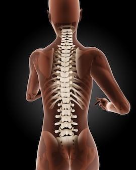 3d render van een vrouwelijk medisch skelet met close-up op rug