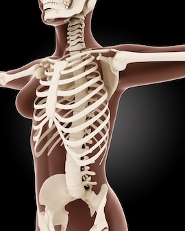 3d render van een vrouwelijk medisch skelet