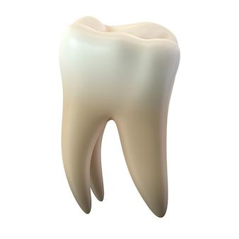 3d render van enkele molaire tand geïsoleerd op een witte achtergrond.