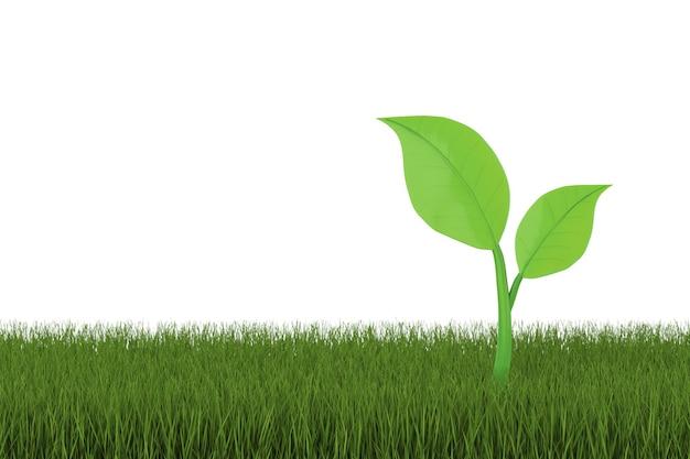 3d-rendering groen blad op gras met witte achtergrond