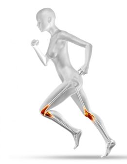 3d vrouwelijke medische figuur met gedeeltelijke spierkaart-jogging