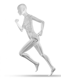 3d vrouwelijke medische figuur met skelet joggen