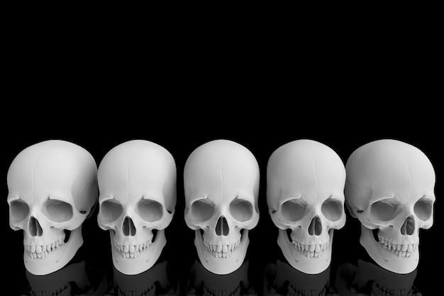 3d-weergave menselijk hoofd schedel bot rij met reflectie op zwart.