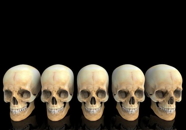 3d-weergave oude menselijk hoofd schedel bot rij met reflectie op zwart.
