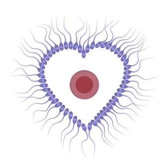 3d-weergave van sperma met ei geïsoleerd op een witte achtergrond, valentijn concept