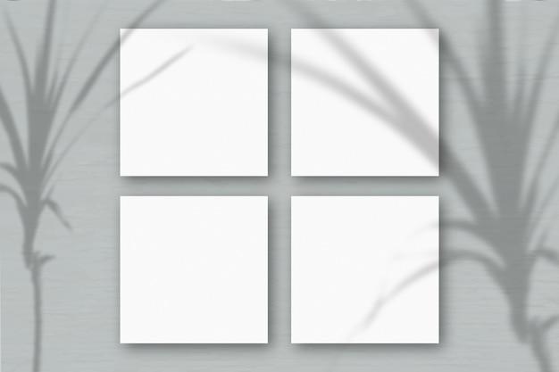 4 vierkante vellen wit getextureerd papier op de grijze muurachtergrond. mockup-overlay met de plantschaduwen. natuurlijk licht werpt schaduwen van een tropische plant. plat lag, bovenaanzicht. horizontaal
