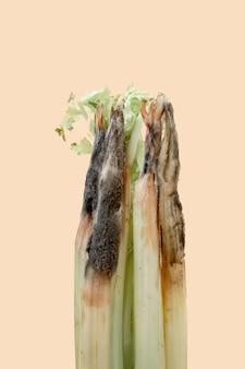 A close up van een ongezonde bedorven bedorven selderij op lichte achtergrond. beschimmelde selderij.