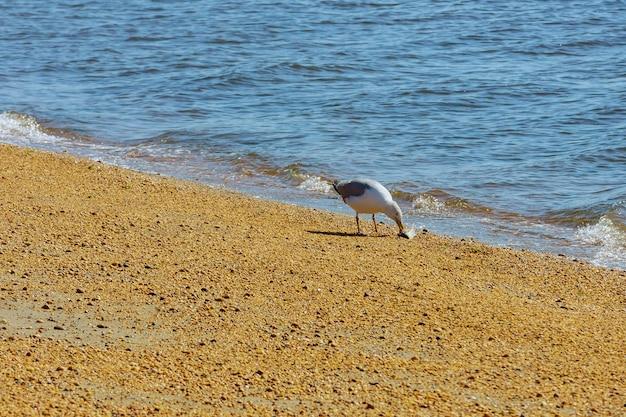 Aalscholver met het eten van vis gevangen in de oceaan om comfortabel te eten