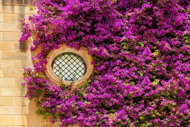 Aan de muur hangt een prachtige sierklimplant omringd door felpaarse bloemen.