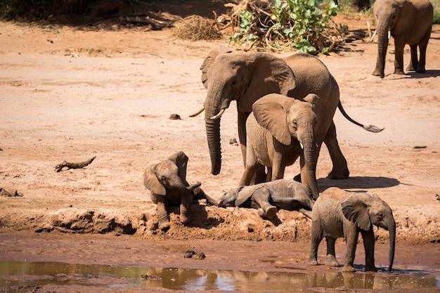 Aan de oever van een rivier staat een grote olifantenfamilie