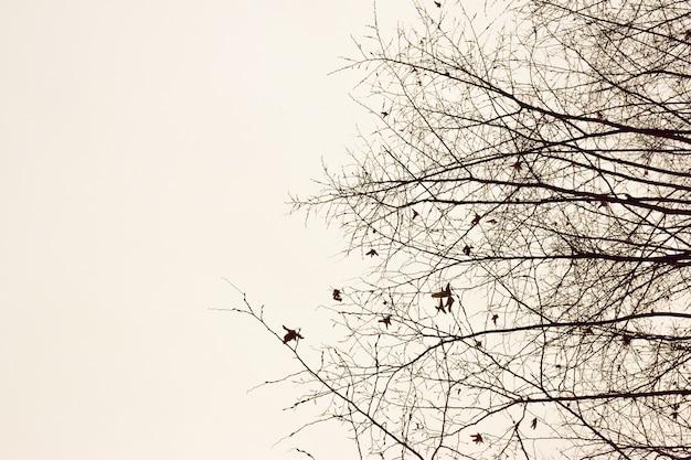 Aan de rechterkant van het frame, de contouren van kale takken van herfstbomen zonder bladeren op een witte uitknipachtergrond