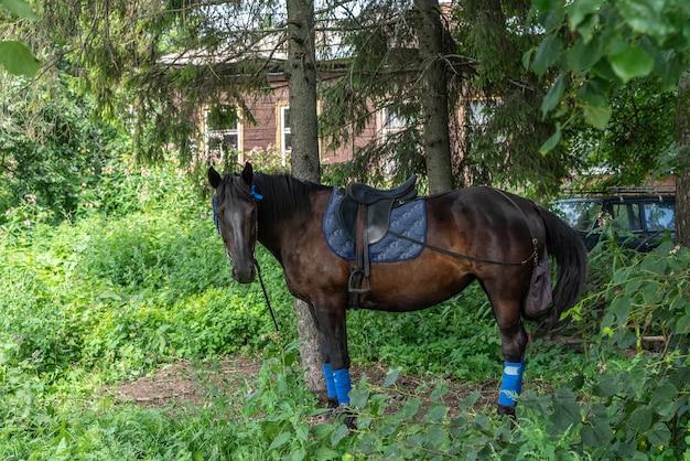 Aanbiddelijk bruin paard met zwarte manen en staarttrens