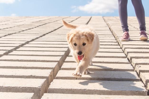 Aanbiddelijk hondje dat langs de kustbakstenen loopt.
