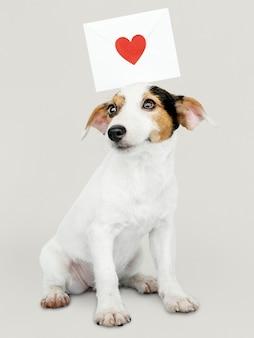 Aanbiddelijk jack russell retriever-puppy met een liefdebrief