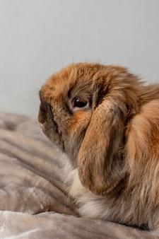 Aanbiddelijk konijn dat in bed legt