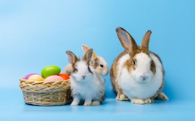 Aanbiddelijk moederkonijn met twee babykonijnen die naast kleurrijke paaseieren in mand zitten