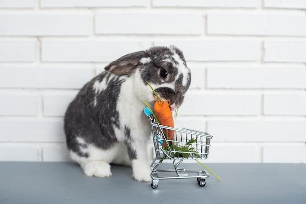 Aanbiddelijk pluizig konijntje dat verse wortel van stuk speelgoedboodschappenwagentje eet tegen witte bakstenen muur