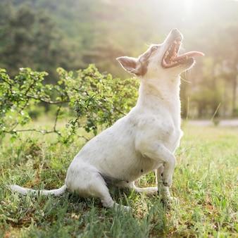 Aanbiddelijk portret van kleine hond die van tijd in het park genieten