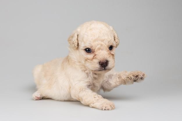 Aanbiddelijk puppy dat op witte achtergrond wordt geïsoleerd