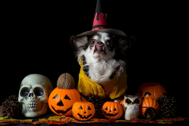 Aanbiddelijke chihuahuahond die een halloween-heksenhoed draagt en een pompoen op donkere achtergrond houdt. fijne halloween-dag.