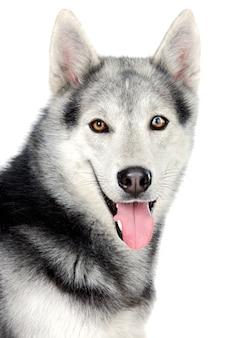 Aanbiddelijke hond over witte achtergrond