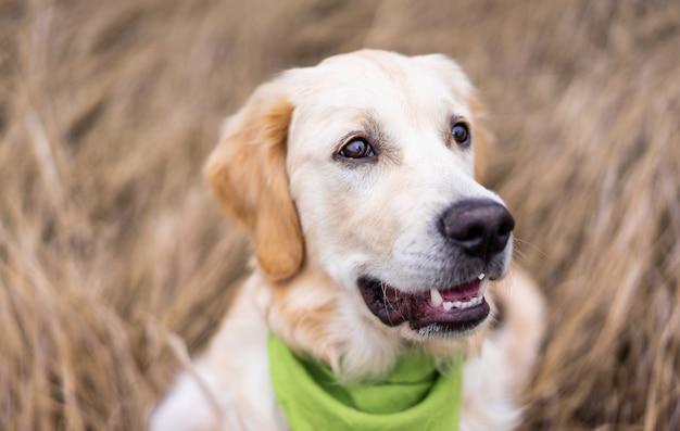 Aanbiddelijke hondmuilkorf op droog grasachtergrond