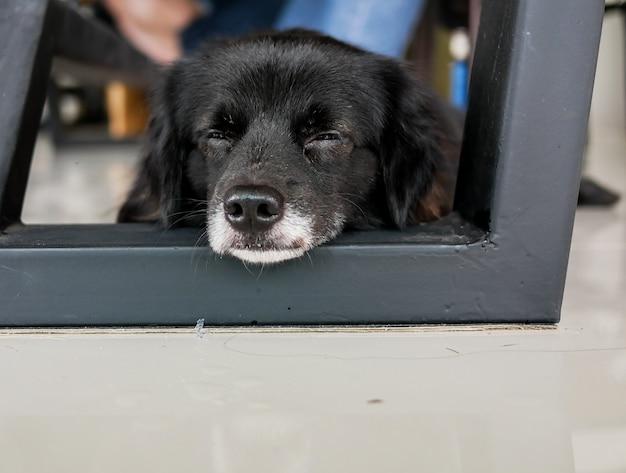 Aanbiddelijke zwarte hond die op de grond ligt