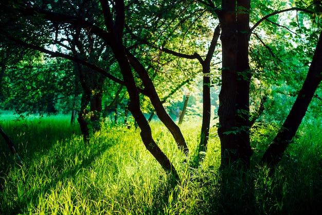 Aangenaam zonnig landschap