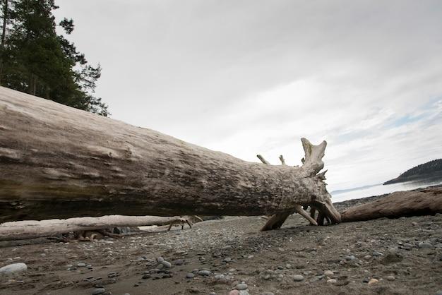 Aanmelden strand in passage pass state park, oak harbor, washington state, verenigde staten