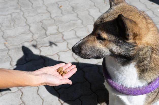Aanmoediging van de hond na het commando. tijdens de training geeft de gastvrouw een traktatie aan de hond. opleiding van honden.