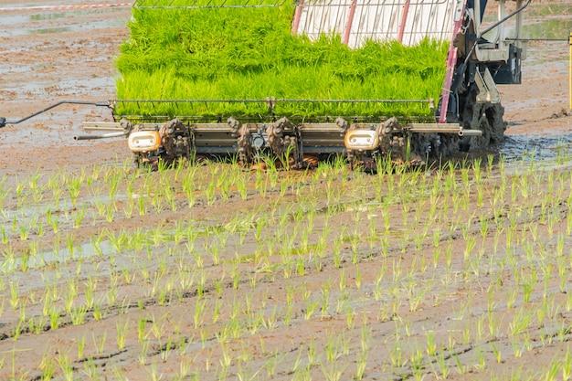 Aanplantings jong padieveld met rijst tranplanter. motor plantage