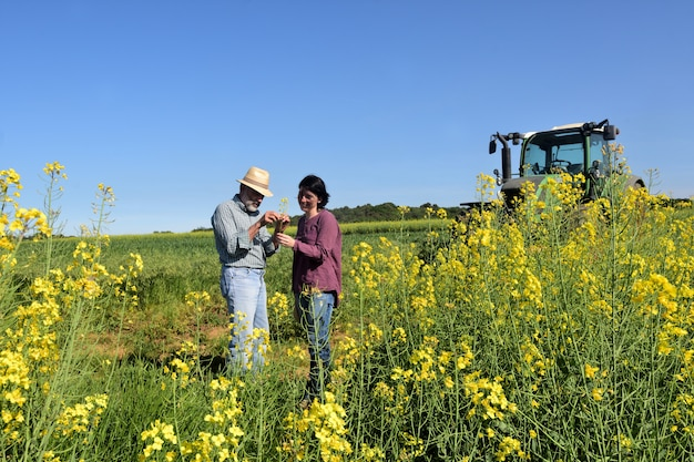 Aantal boeren op een canolagebied met een tractor