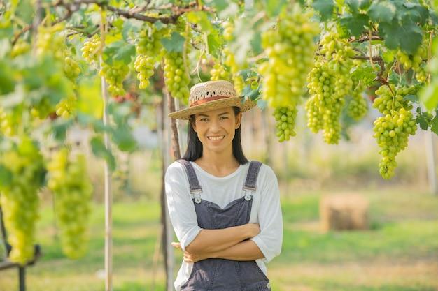 Aantrekkelijke vrouwelijke boer oogsten rijpe druiven in zonnige wijngaard.