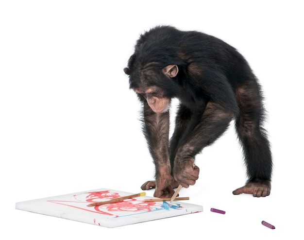 Aap (chimpansee) die op een canvas trekt - simia-holbewoners op een geïsoleerd wit