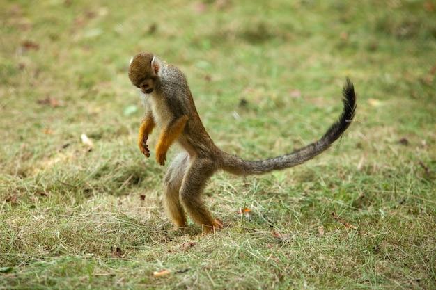 Aap in het park volgt de vegetatie. eekhoorn aap.