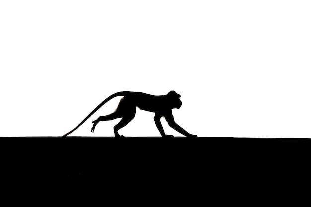 Aap springen silhouet schaduw op een muur