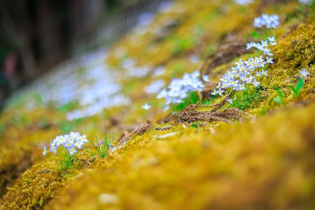 Aard gele en witte bloem over vloertextuur van een tropisch bos.