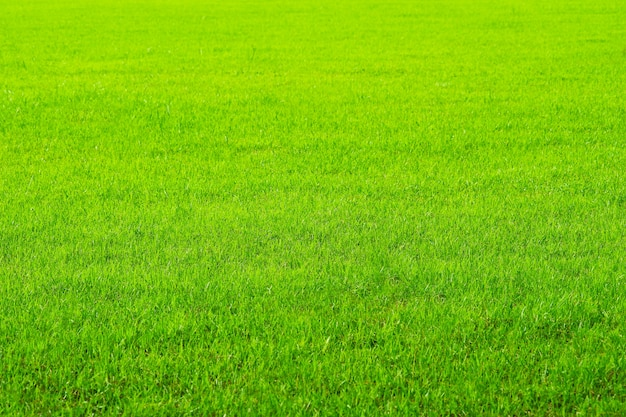 Aard groen gras op de gebiedsachtergrond. boerderij of tuin en kopieer ruimte gebruikend als natuurlijke achtergrond, het landschap van de rijstlandbouw