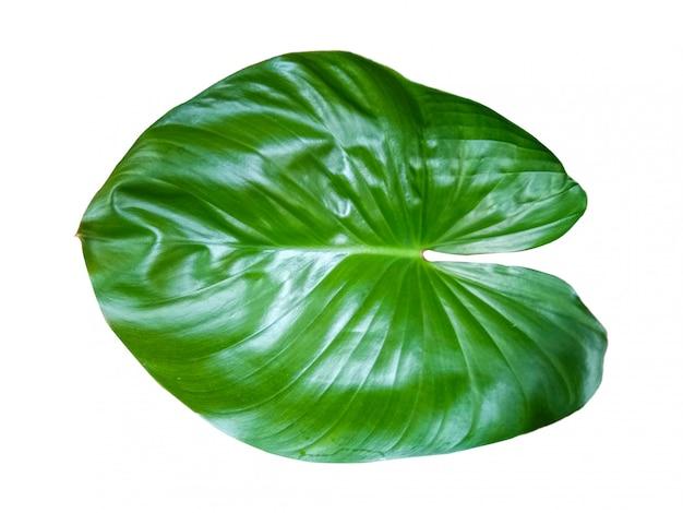 Aard groen verlof op wit geïsoleerde achtergrond Premium Foto