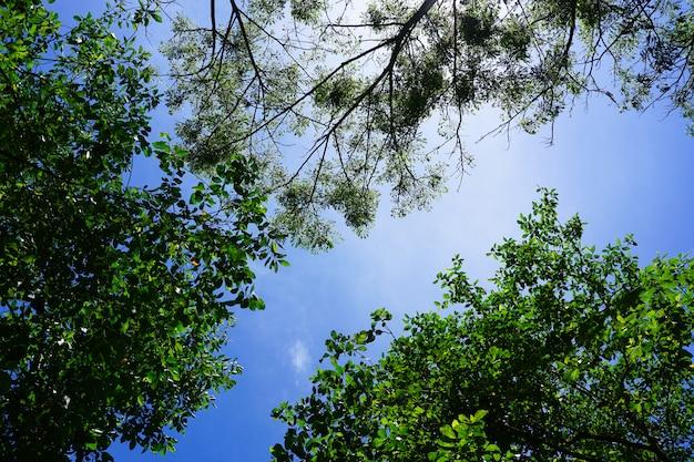 Aard groene bladeren met zonlicht op blauwe hemel