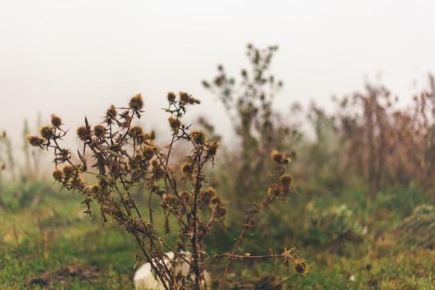 Aard van bergen en dichte mist