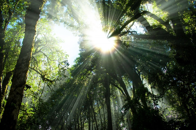 Aard van bos en licht in de ochtend