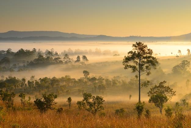Aard van bos nevelig bij zonsopgang in het noorden, thailand