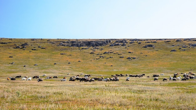 Aard van moldavië, vlakte met schaarse vegetatie, meerdere rotsen en grazende geiten