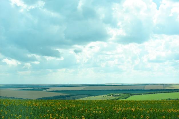 Aard van oekraïne. het landschap van oekraïense landbouwgebieden van de zomergebieden. de boerderij. velden met maïs, tarwe.