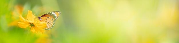 Aard van vlinder en bloem in de tuin met als achtergrond vlinders dag voorblad of banner sjabloon brochure bestemmingspagina behang ontwerp