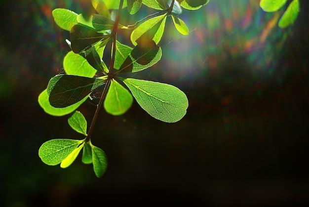 Aardachtergrond van de lentegebladerte in de ochtend met het spectrum van de zonstraal.